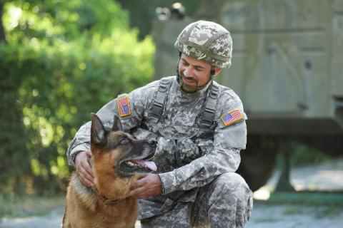 Military dog with soldier