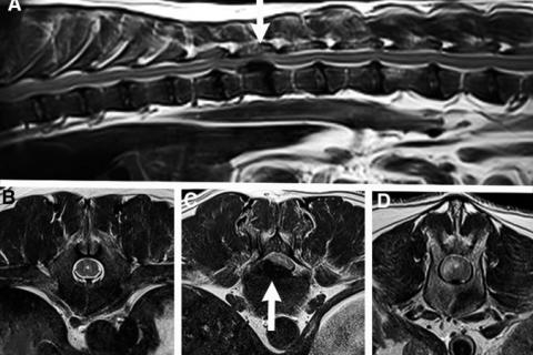 MRI images from publication
