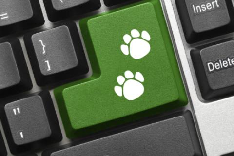 paw prints on keyboard